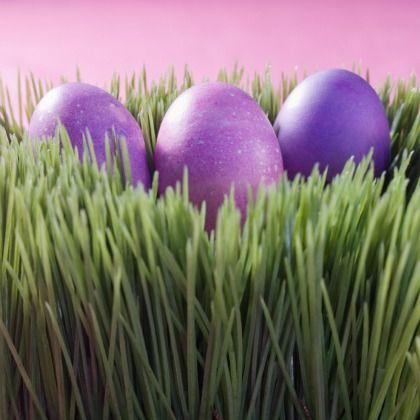 420 purple easter egg