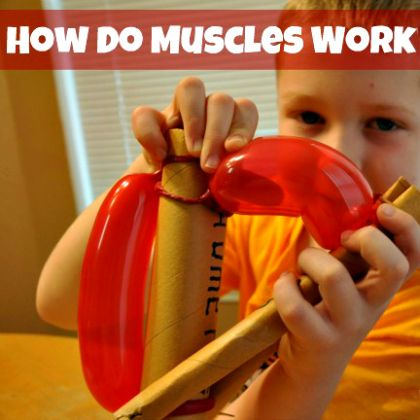 how-do-muscles-work