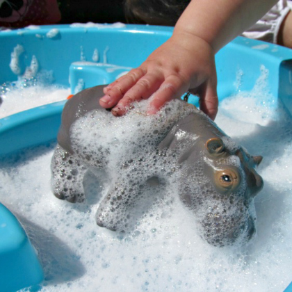 animal washing
