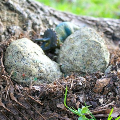 Make Your Own Dinosaur Nests