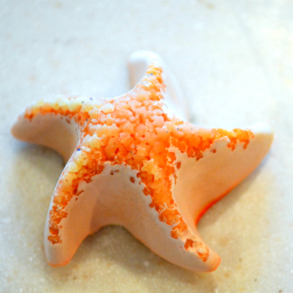 plaster sea star