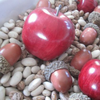 Apples and Acorns (No Time for Flash Cards)