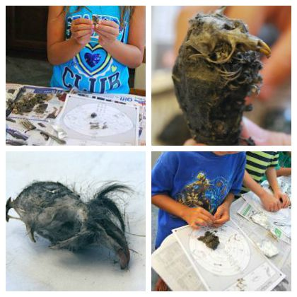 Dissect an Owl Pellet (Kids World Citizen)