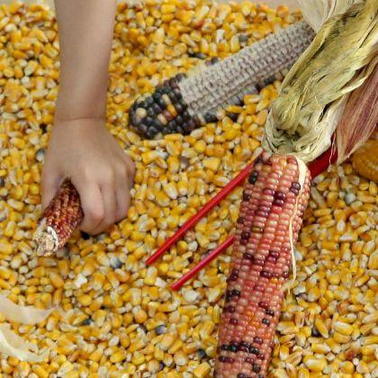 Indian Corn Sensory Bin (Still Playing School)