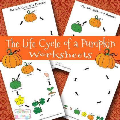 Life Cycle of a Pumpkin (Itsy Bitsy Fun)