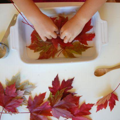 Preserve Leaves in Glycerin (Tinker Labs)