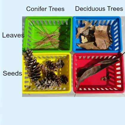 Sorting Leaves and Seeds (Inspiration Labs)