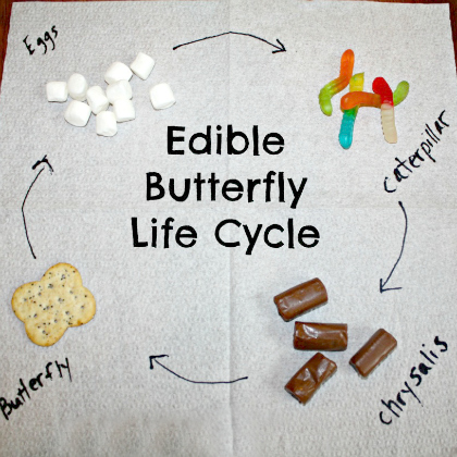 edible butterfly lifecycle