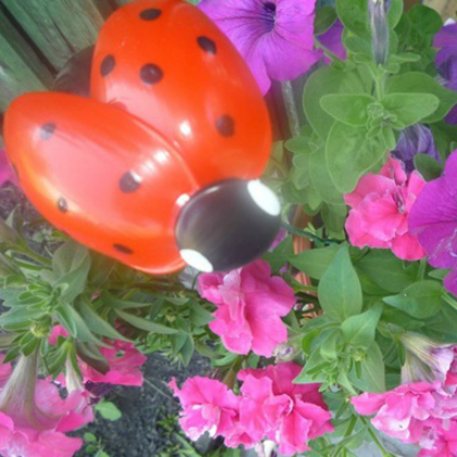 plastic spoon ladybugs