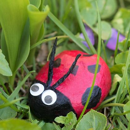 rock ladybug