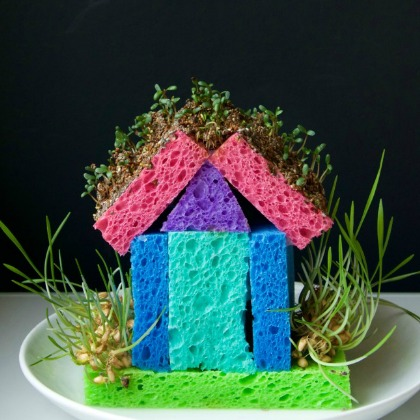 What-an-awesome-spring-science-project-for-kids-Make-a-DIY-sprout-house.-Great-way-to-teach-kids-about-growing-plants-and-its-p
