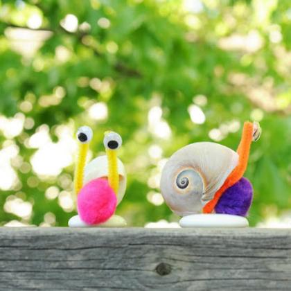 shell snails