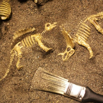 tabletop fossil dig